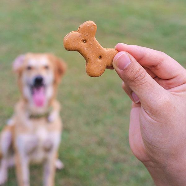 Giving dog treat